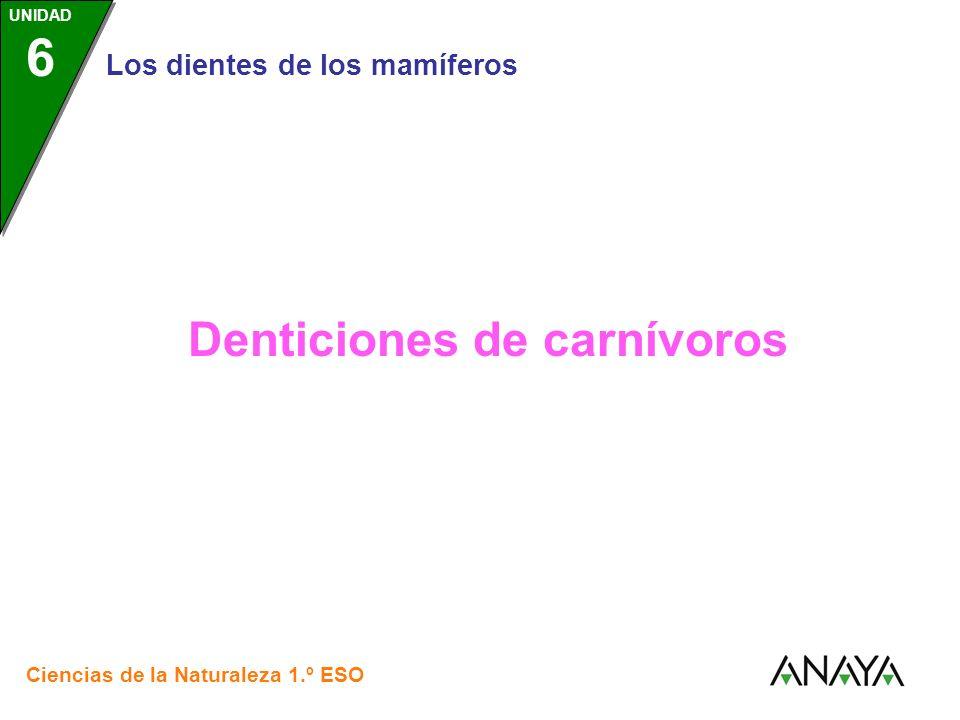 Denticiones de carnívoros