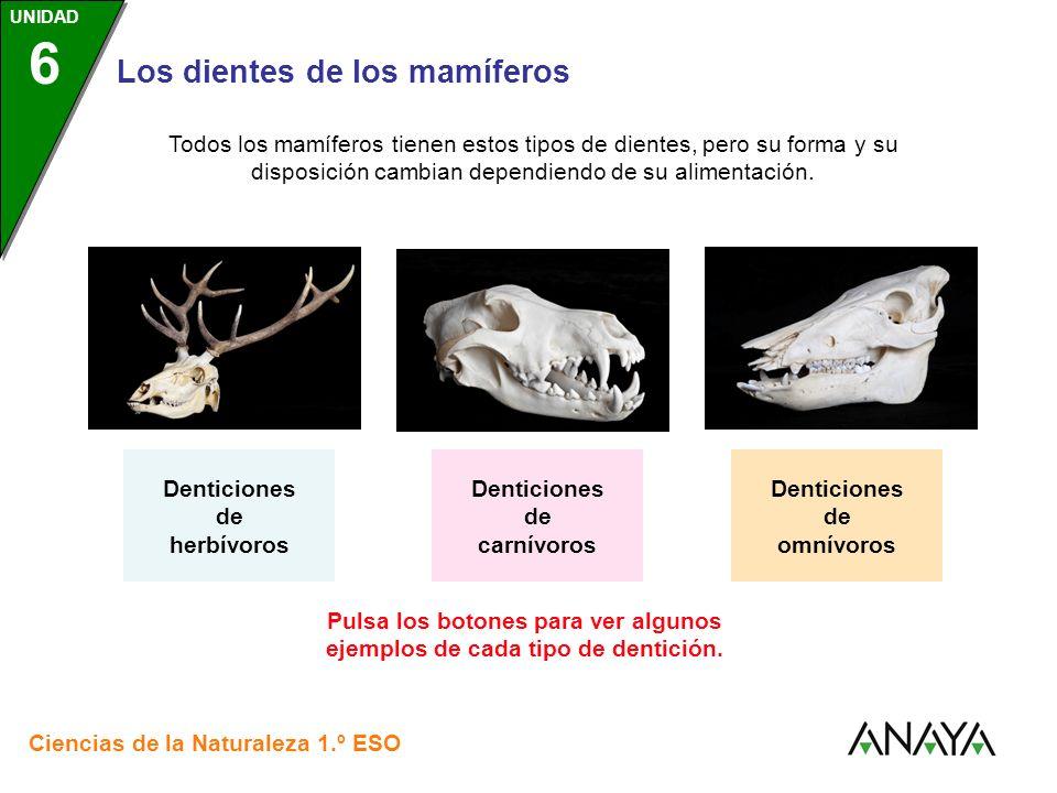 Denticiones de herbívoros Denticiones de carnívoros