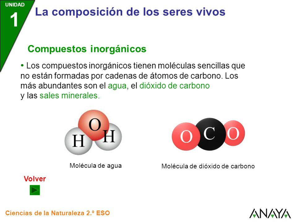 O C O H La composición de los seres vivos Compuestos inorgánicos