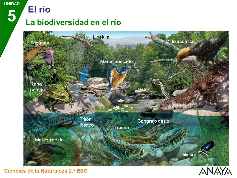El río La biodiversidad en el río Ciencias de la Naturaleza 2.º ESO