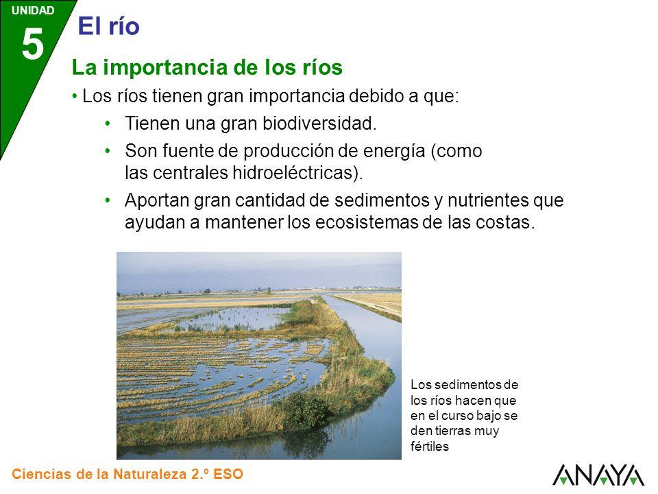 El río La importancia de los ríos