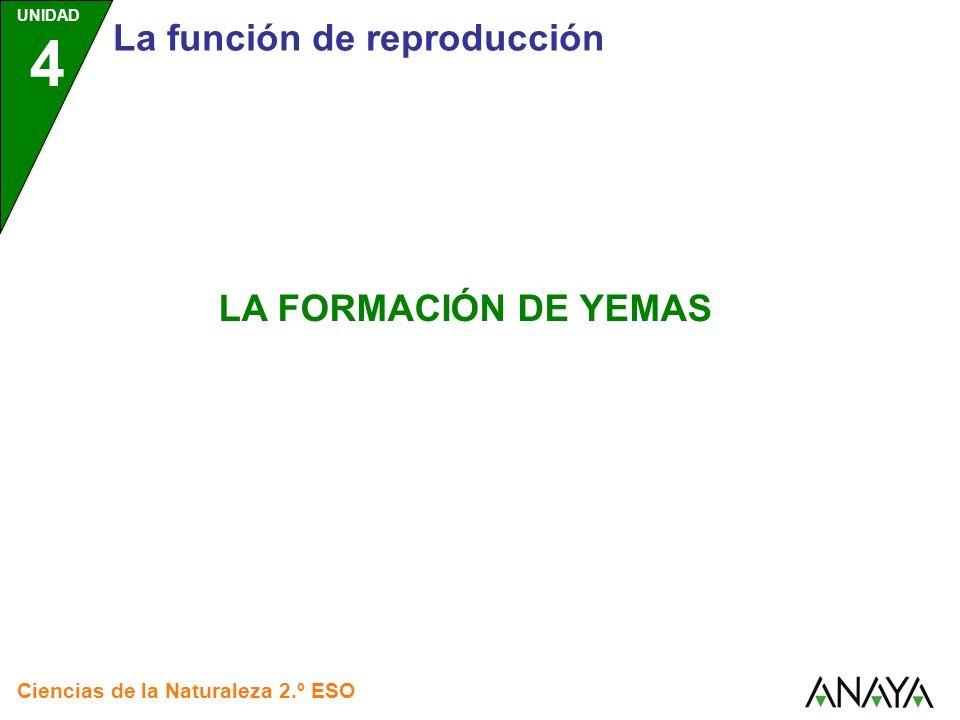 La función de reproducción