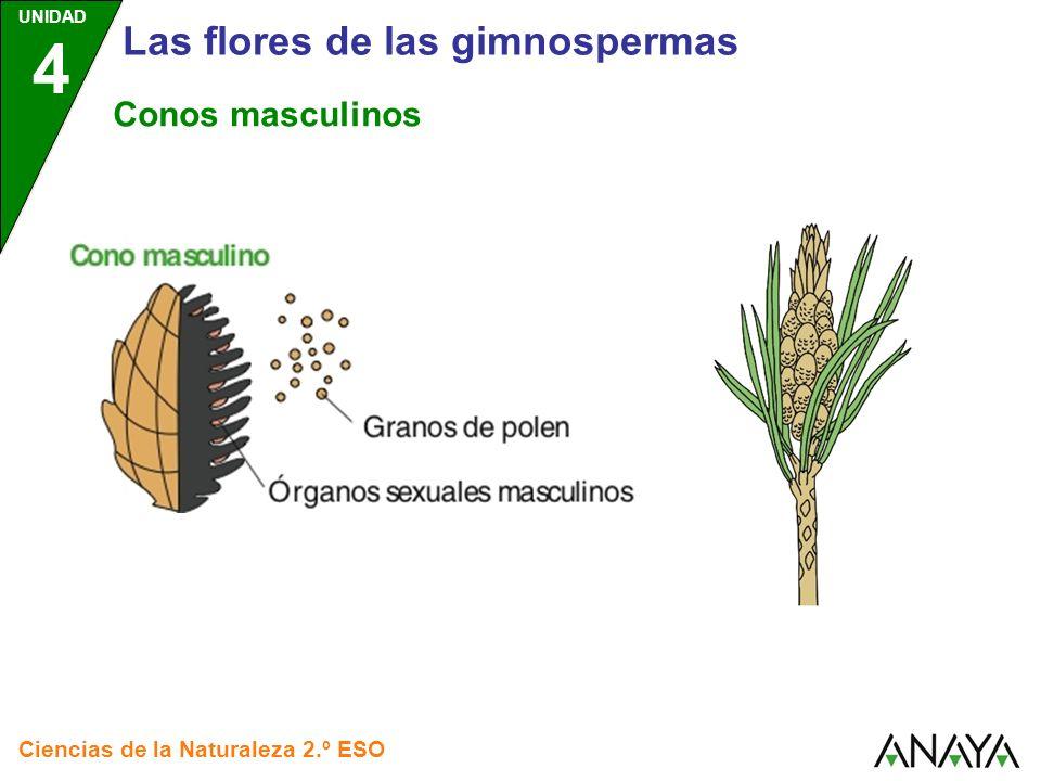 Las flores de las gimnospermas