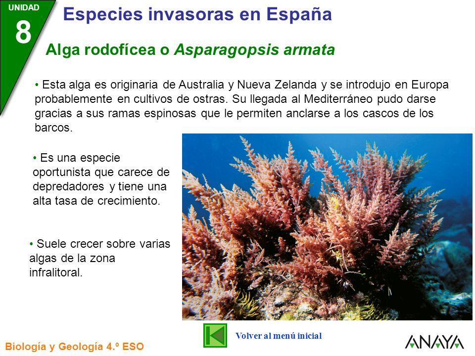 Alga rodofícea o Asparagopsis armata