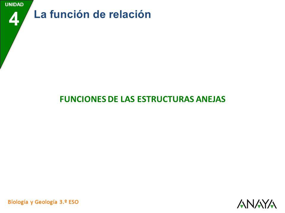 FUNCIONES DE LAS ESTRUCTURAS ANEJAS