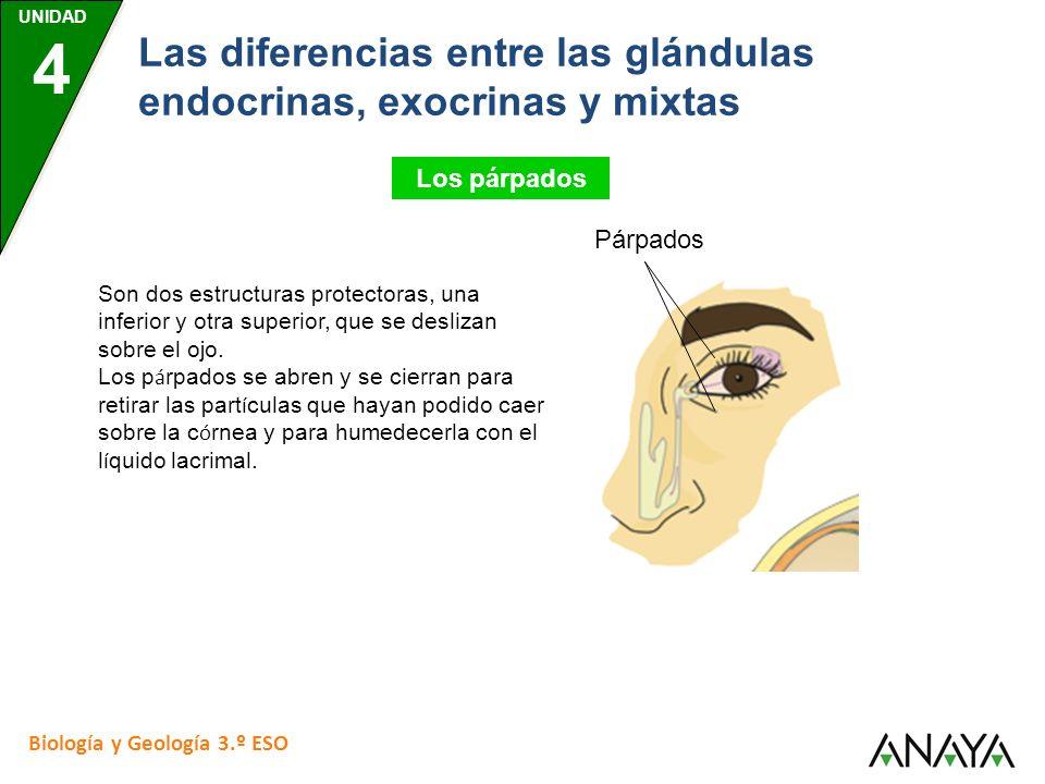 Las diferencias entre las glándulas endocrinas, exocrinas y mixtas