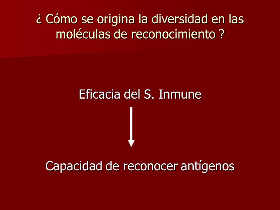 ¿ Cómo se origina la diversidad en las moléculas de reconocimiento