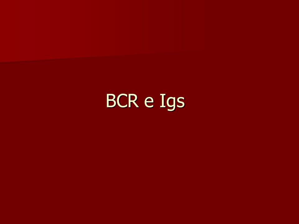 BCR e Igs