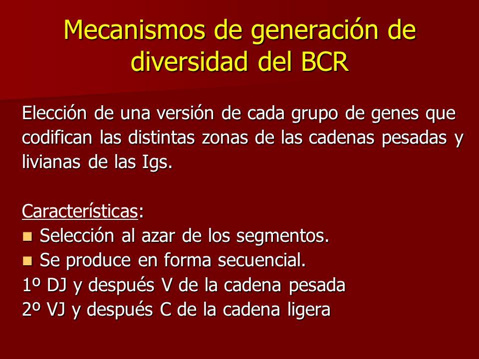 Mecanismos de generación de diversidad del BCR
