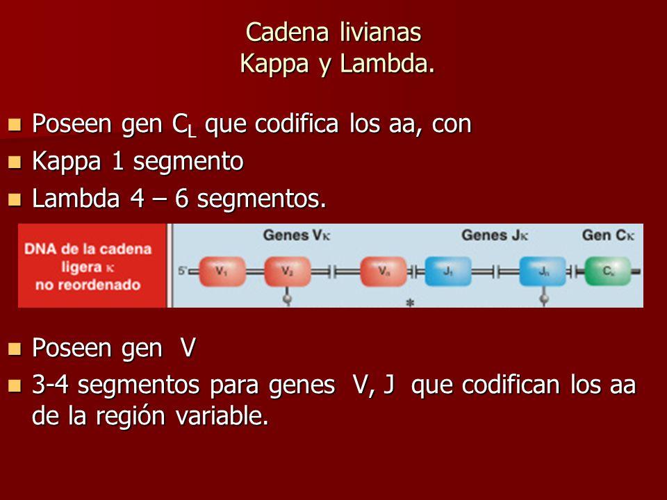 Cadena livianas Kappa y Lambda.