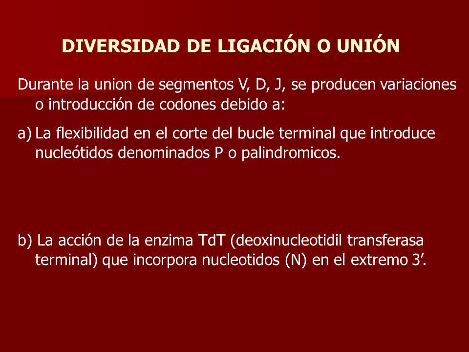 DIVERSIDAD DE LIGACIÓN O UNIÓN