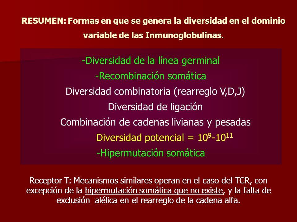 RESUMEN: Formas en que se genera la diversidad en el dominio variable de las Inmunoglobulinas.