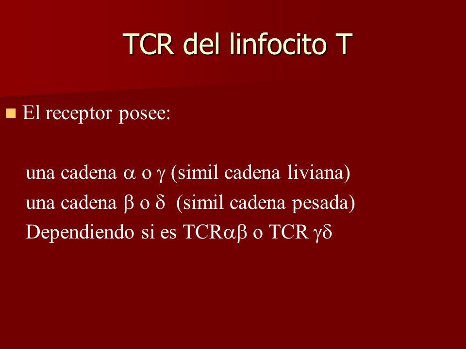 TCR del linfocito T El receptor posee: