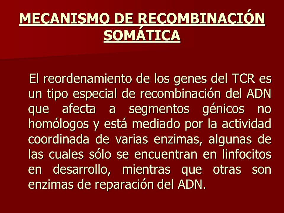 MECANISMO DE RECOMBINACIÓN SOMÁTICA