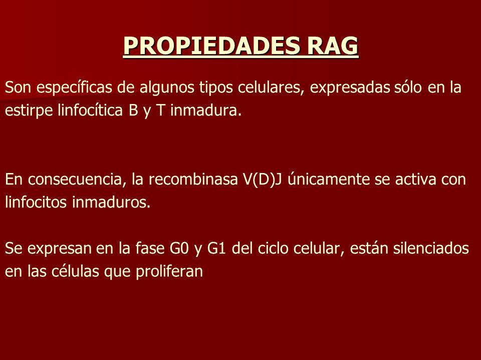 PROPIEDADES RAG Son específicas de algunos tipos celulares, expresadas sólo en la. estirpe linfocítica B y T inmadura.