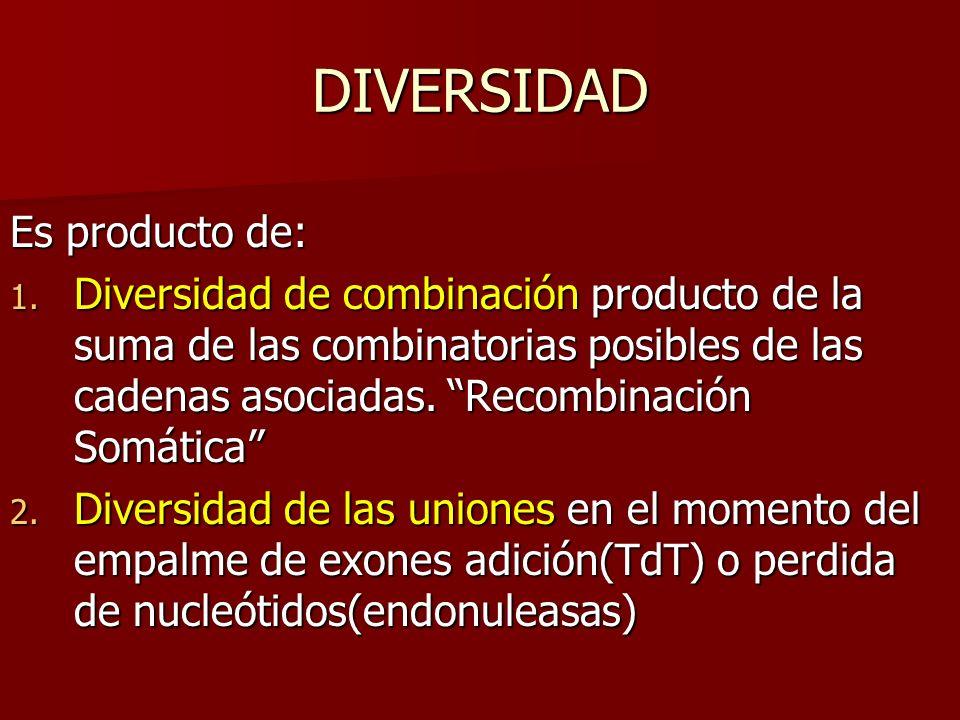 DIVERSIDAD Es producto de: