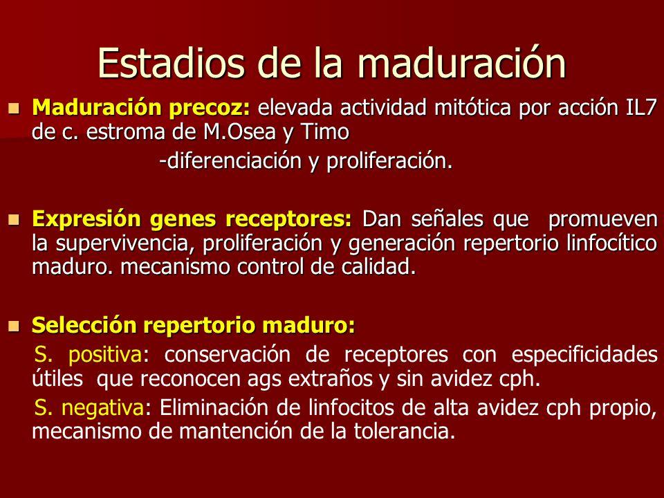 Estadios de la maduración