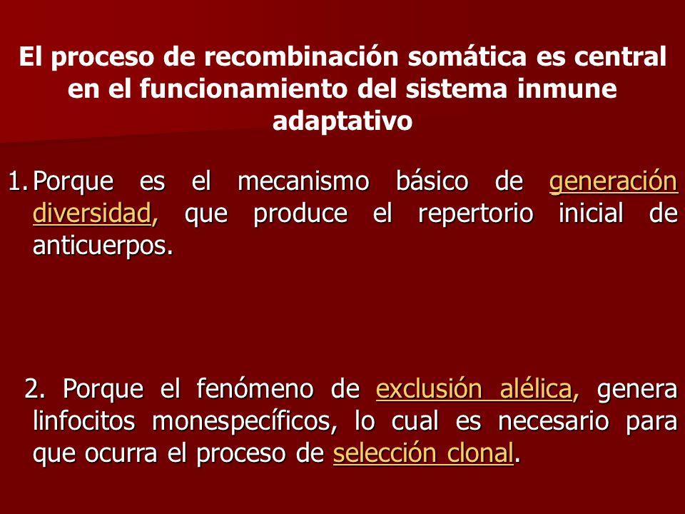 El proceso de recombinación somática es central en el funcionamiento del sistema inmune adaptativo