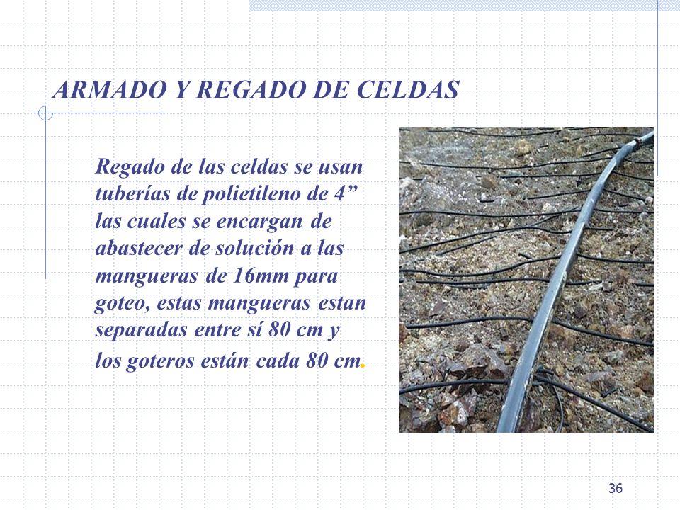 ARMADO Y REGADO DE CELDAS