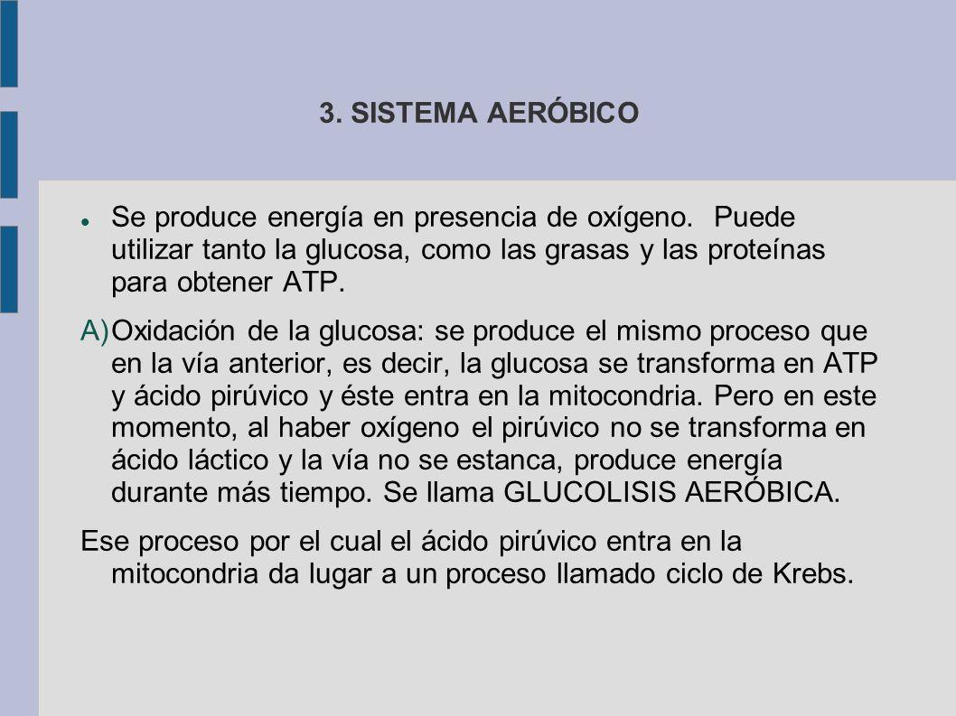 3. SISTEMA AERÓBICO Se produce energía en presencia de oxígeno. Puede utilizar tanto la glucosa, como las grasas y las proteínas para obtener ATP.