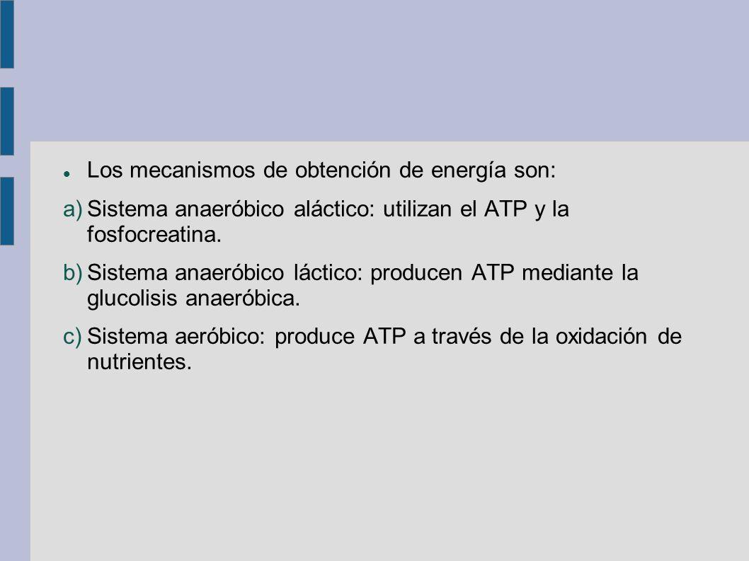 Los mecanismos de obtención de energía son: