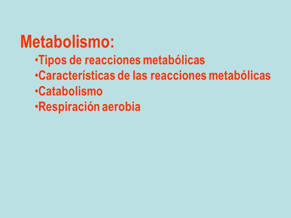 Metabolismo: Tipos de reacciones metabólicas