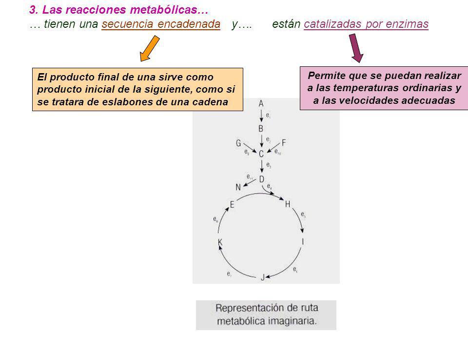 3. Las reacciones metabólicas…