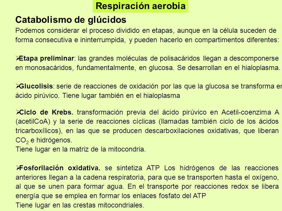 Catabolismo de glúcidos