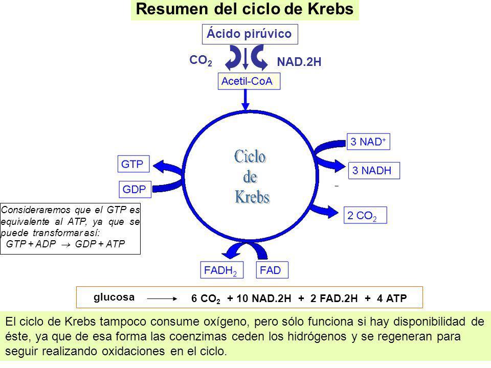 Resumen del ciclo de Krebs