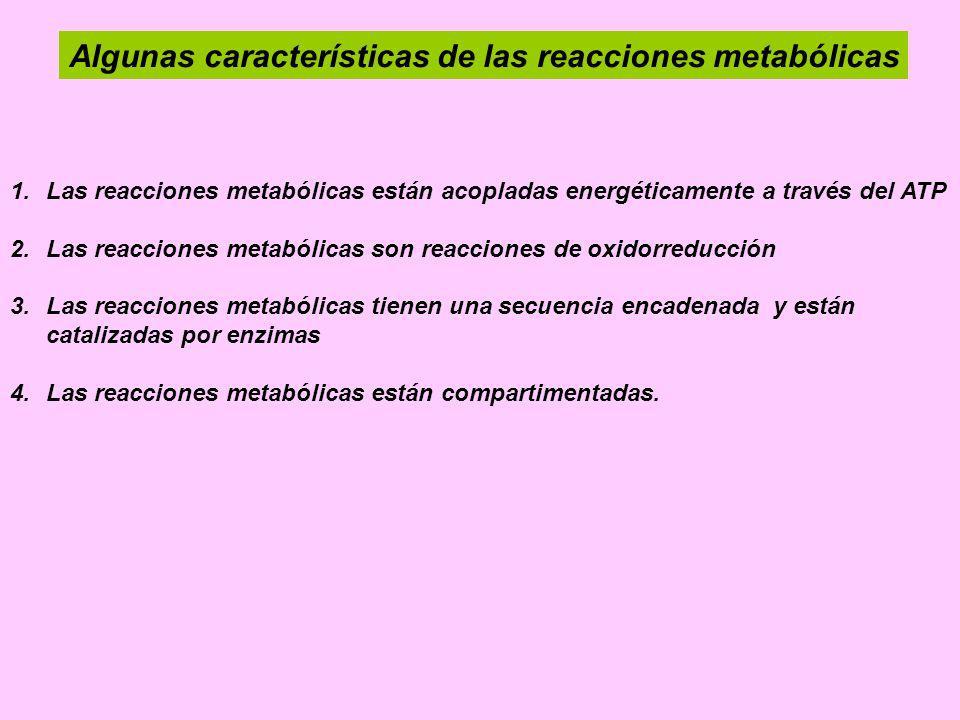 Algunas características de las reacciones metabólicas