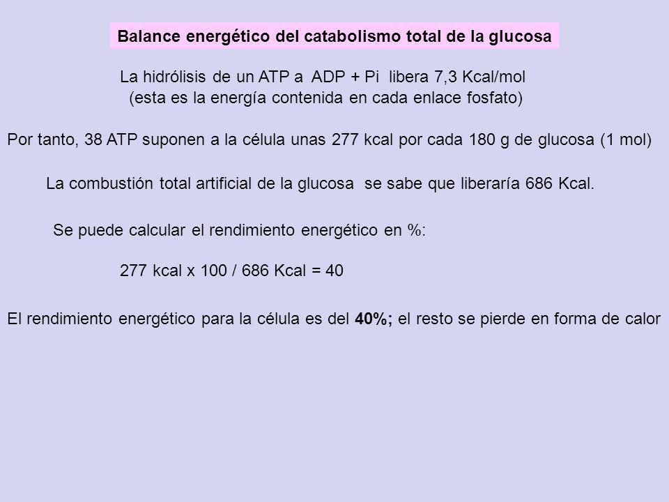 Balance energético del catabolismo total de la glucosa