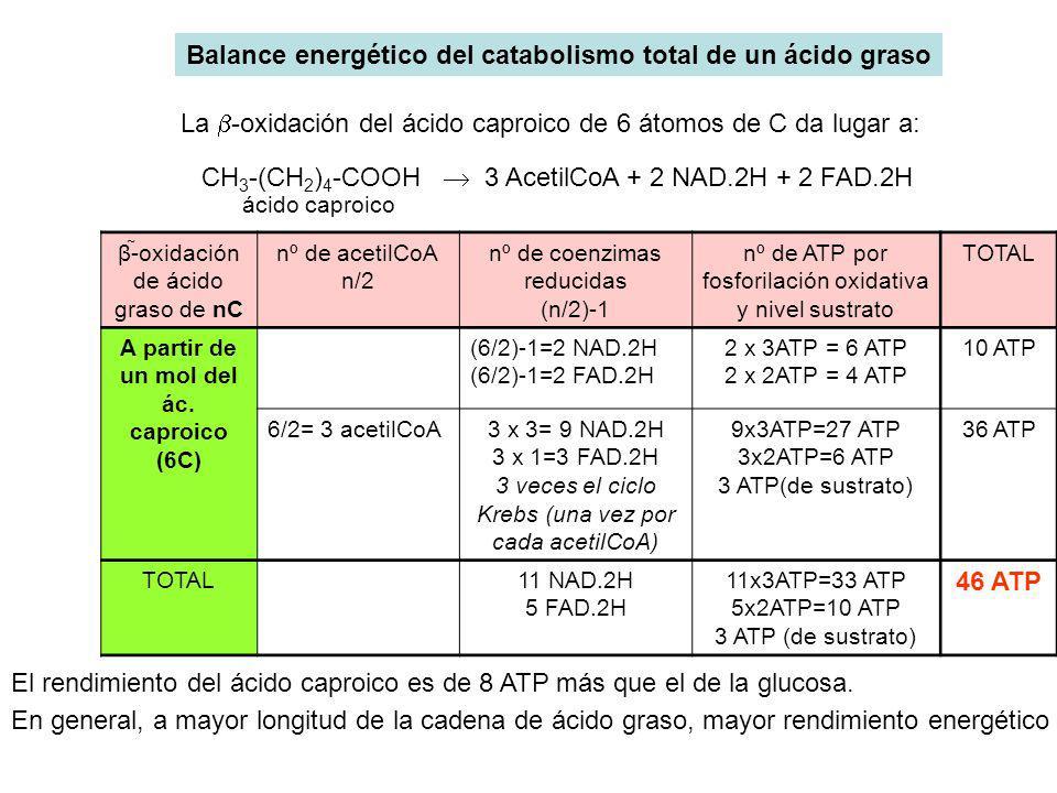 Balance energético del catabolismo total de un ácido graso