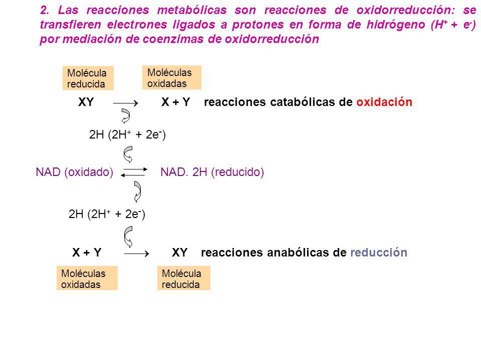XY  X + Y reacciones catabólicas de oxidación