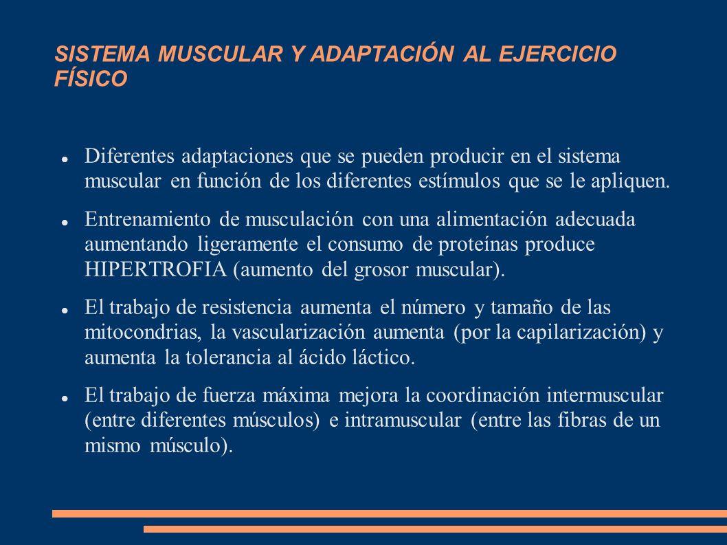 SISTEMA MUSCULAR Y ADAPTACIÓN AL EJERCICIO FÍSICO