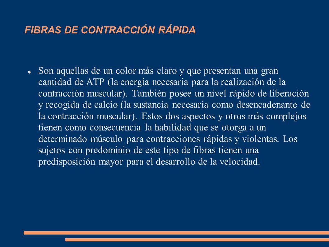 FIBRAS DE CONTRACCIÓN RÁPIDA