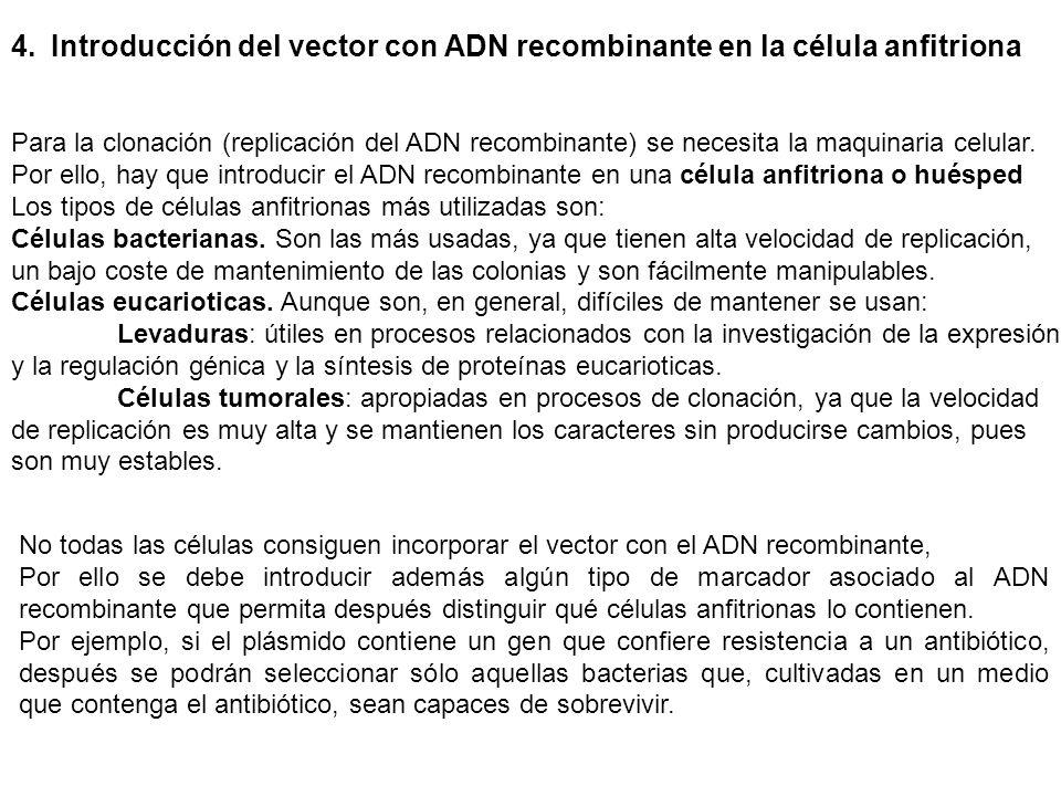 Introducción del vector con ADN recombinante en la célula anfitriona