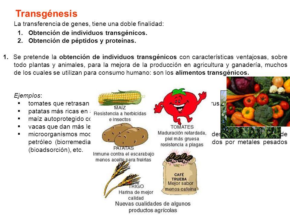 Transgénesis La transferencia de genes, tiene una doble finalidad: