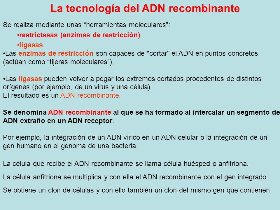 La tecnología del ADN recombinante