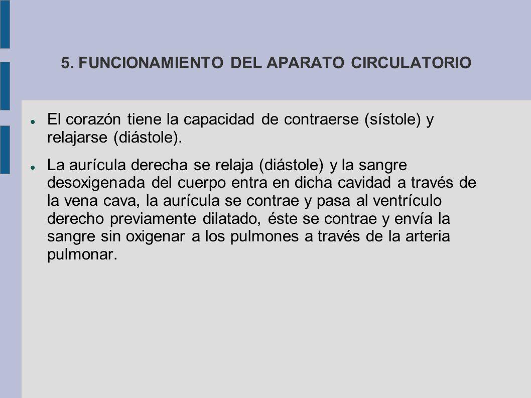 5. FUNCIONAMIENTO DEL APARATO CIRCULATORIO