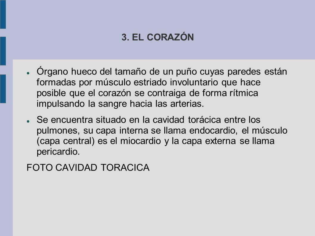 3. EL CORAZÓN