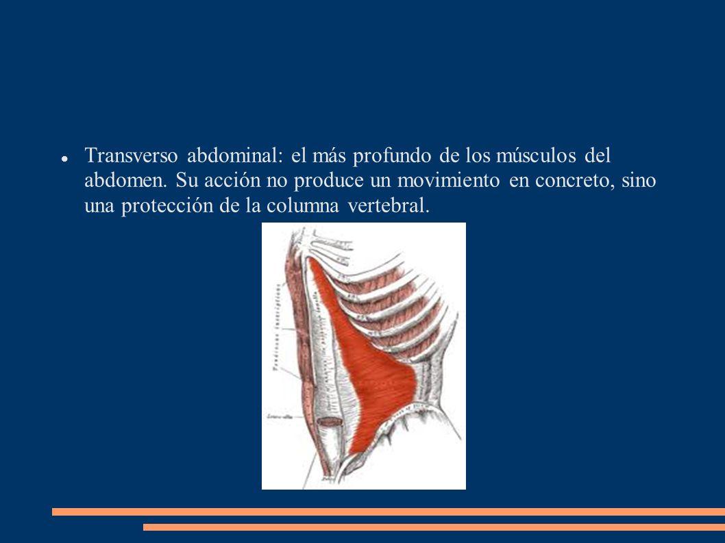 Transverso abdominal: el más profundo de los músculos del abdomen