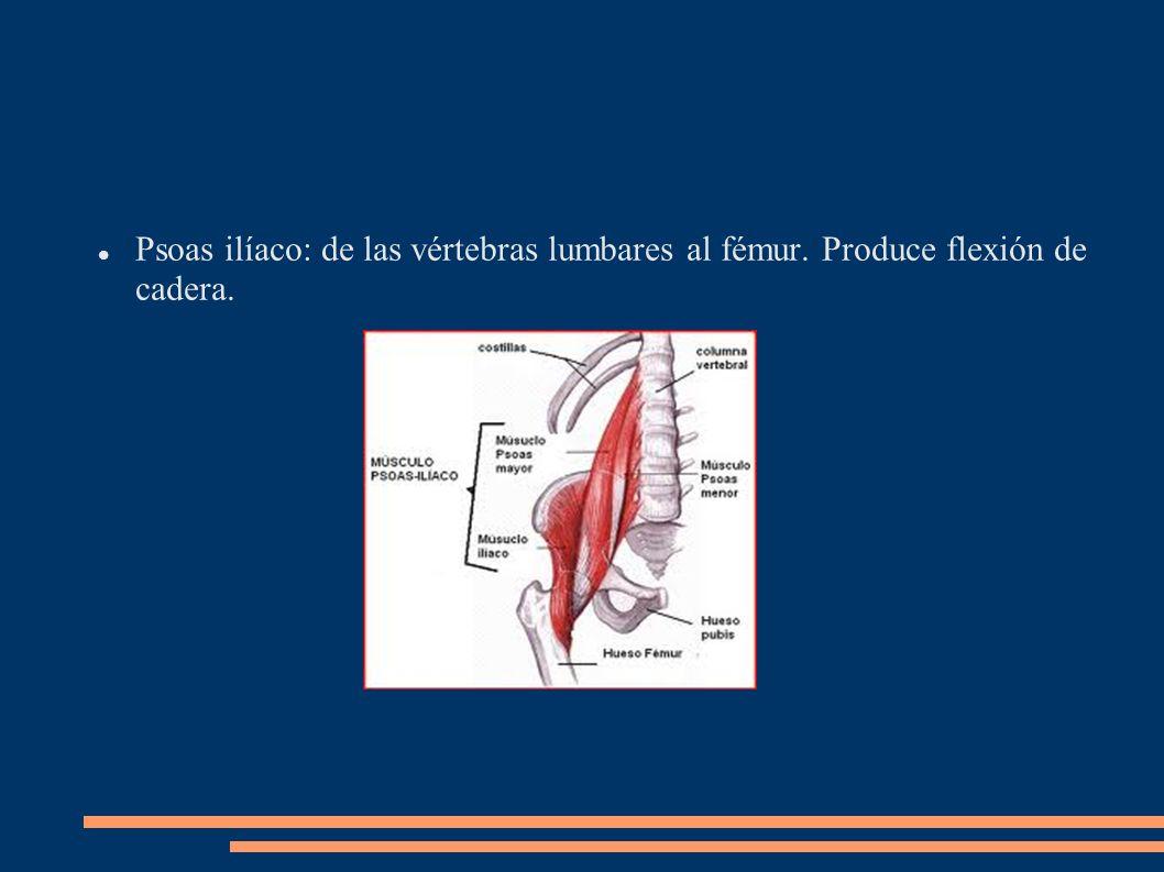 Psoas ilíaco: de las vértebras lumbares al fémur