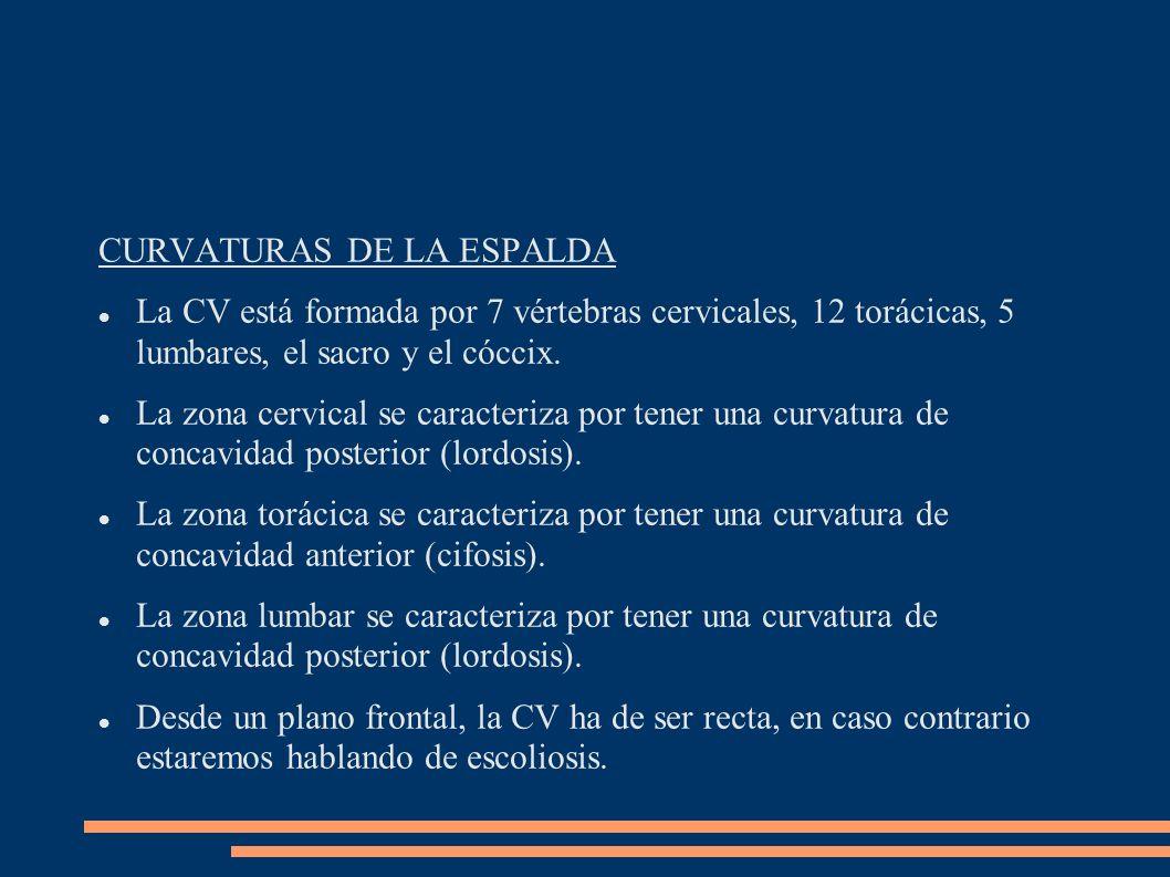 CURVATURAS DE LA ESPALDA