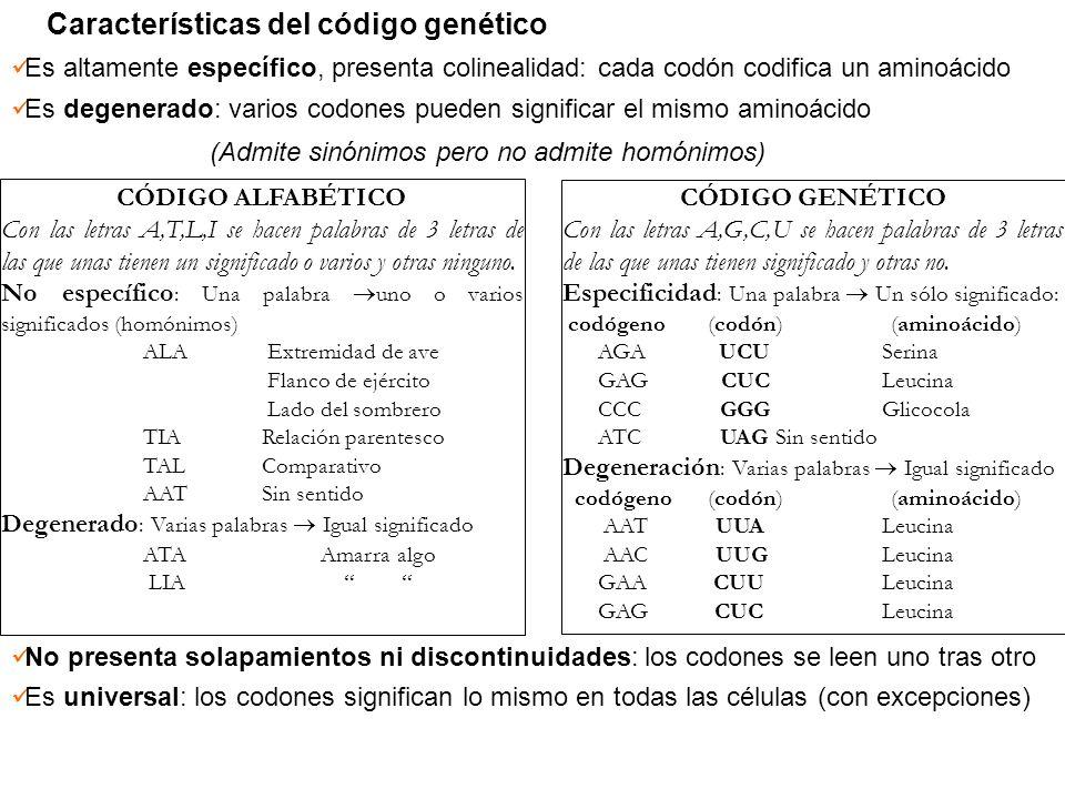 Características del código genético