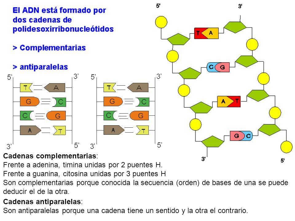 Cadenas complementarias: