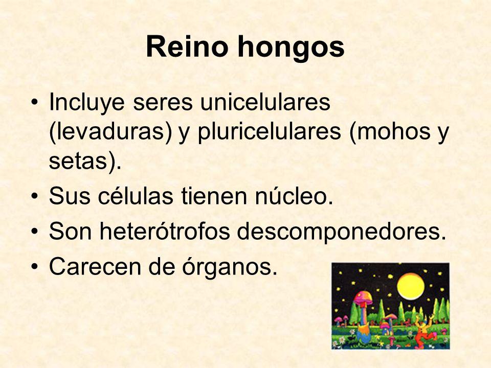 Reino hongosIncluye seres unicelulares (levaduras) y pluricelulares (mohos y setas). Sus células tienen núcleo.