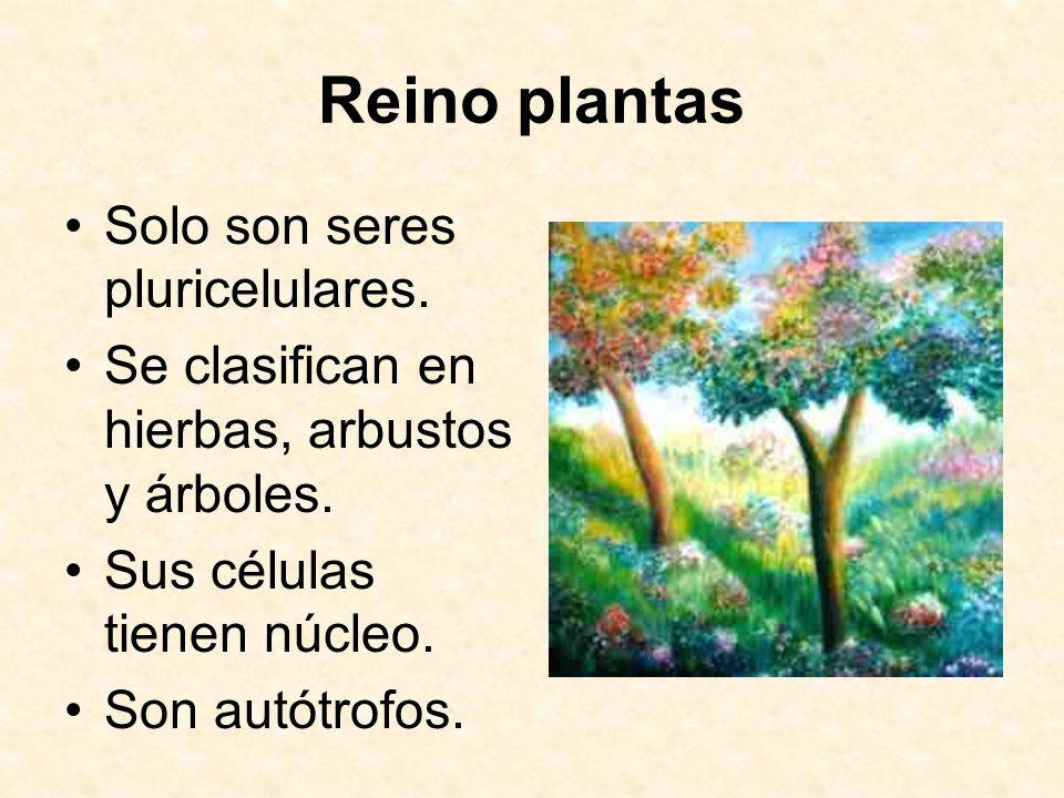 Reino plantas Solo son seres pluricelulares.