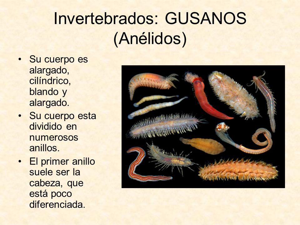 Invertebrados: GUSANOS (Anélidos)