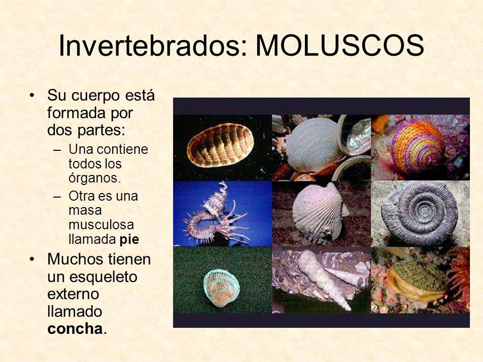 Invertebrados: MOLUSCOS
