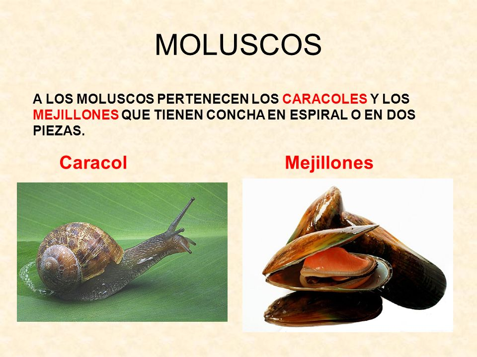 MOLUSCOS Caracol Mejillones